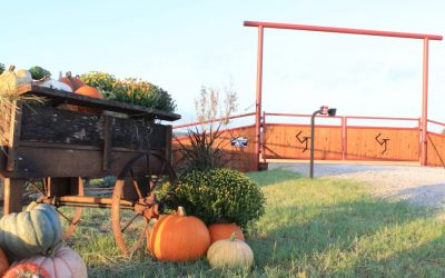 Holiday Driveway Gate Do's & Don'ts